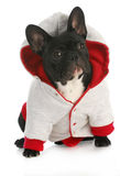 Dog wearing coat Stock Photo