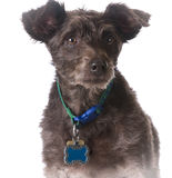 Dog wearing a collar with a name tag Stock Photo