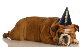 Dog wearing dunce cap Royalty Free Stock Photos