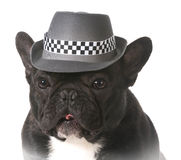 Dog wearing fedora Stock Photos