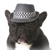 Dog wearing fedora Stock Photos