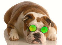 Dog wearing funny glasses Royalty Free Stock Photos
