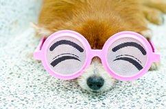 Dog wearing funny glasses Stock Image