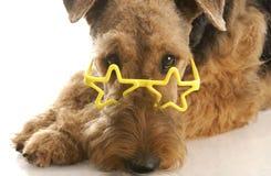 Dog wearing glasses Stock Image
