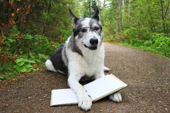 Dog wearing glasses with a pencil in its mouth Royalty Free Stock Image