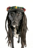 Dog wearing hat Royalty Free Stock Photography