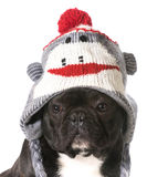 Dog wearing hat Royalty Free Stock Photos