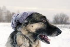 Dog Wearing Hat Stock Photos
