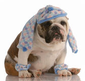 Dog wearing hat and scarf Royalty Free Stock Photos