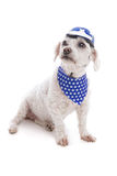 Dog wearing helmet and bandana Royalty Free Stock Images