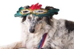 Dog wearing Mardi Gras mask stock photos