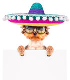 Dog wearing a mexican hat with banner royalty free stock images