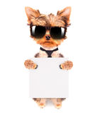 Dog wearing a neck bow and shades with banner Stock Photos