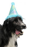Dog wearing party cone Stock Image