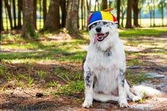 Dog wearing propeller beanie Royalty Free Stock Image