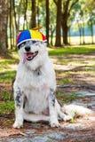 Dog wearing propeller beanie Royalty Free Stock Photos