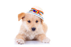 Dog wearing a romanian traditional hat Royalty Free Stock Image