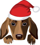 Dog wearing a Santa Claus hat Royalty Free Stock Photography