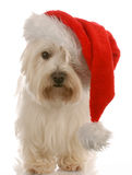 Dog wearing santa hat Stock Photography