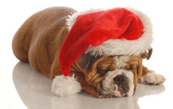 Dog wearing santa hat Royalty Free Stock Photo