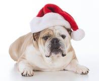 Dog wearing santa hat Royalty Free Stock Photography