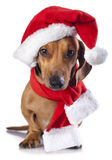 Dog  wearing a santa hat. Dog and cat and kitens wearing a santa hat Royalty Free Stock Photography