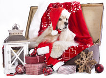 Dog wearing a santa hat Royalty Free Stock Photos