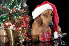 Dog  wearing a santa hat Royalty Free Stock Images