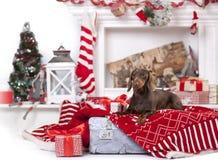 Dog wearing a santa hat stock photos