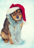 Dog wearing Santa hat Stock Image