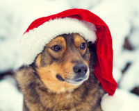 Dog wearing Santa hat Royalty Free Stock Photography