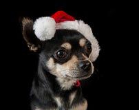 Dog wearing Santa hat Royalty Free Stock Photos