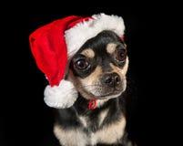 Dog wearing a Santa hat Royalty Free Stock Photos