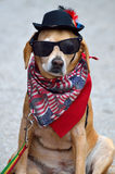 Dog wearing scarf, hat and sunglasses Stock Photo