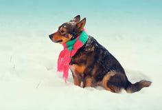 Dog wearing scarf Stock Photos