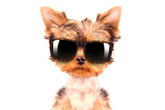 Dog wearing a shades Stock Photos