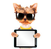 Dog wearing a shades with tablet pc. Cute puppy dog wearing a shades holding a blank tablet pc stock images