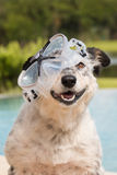 Dog wearing snorkeling mask Stock Photography