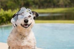 Dog wearing snorkeling mask Stock Photos