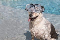 Dog wearing snorkeling mask Royalty Free Stock Photo