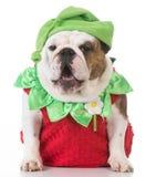 Dog wearing strawberry costume Royalty Free Stock Images