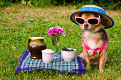 Dog wearing suit,hat and glasses in meadow