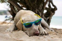 Dog wearing sunglasses Royalty Free Stock Images