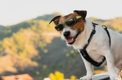 Dog wearing sunglasses as happy tourist posing at observation point at top of mountain stock photo