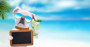 Dog wearing sunglasses relaxing in the sea background. Dog holds blank blackboard . Humor Stock Image