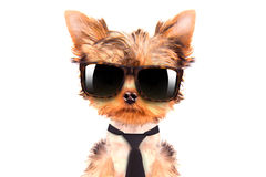 Dog wearing a tongue and shades Stock Photo