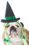 Dog wearing witch costume Stock Photo