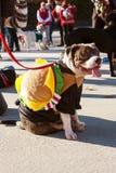 Dog Wears Hamburger Costume For Eclectic Atlanta Parade Royalty Free Stock Photography