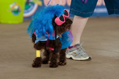 Dog Wears Lady Gaga Costume At Festival Stock Photo