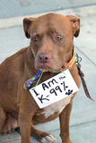 Dog wears sign in protest Stock Image